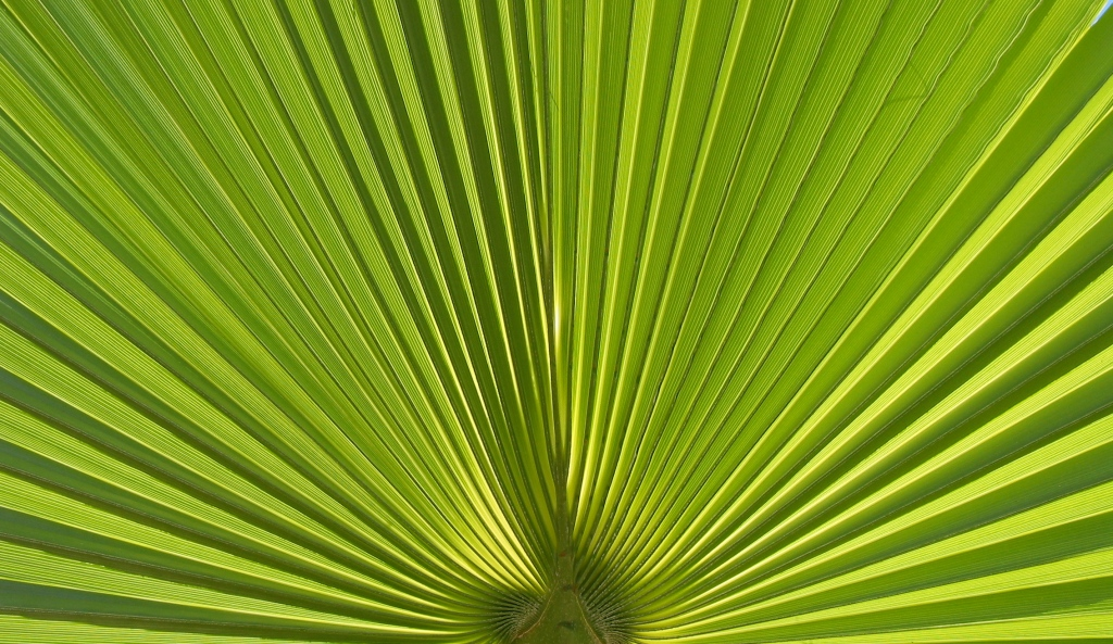 Natur Photographie